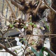 猫の額にも春が来た!!