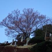 小さな菜園(3月中旬)☆春ジャガイモ発芽