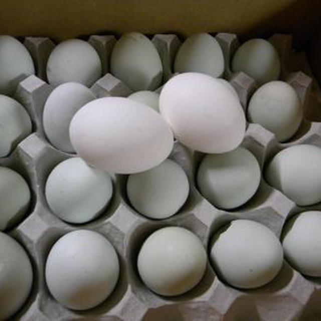 緑色の有精卵