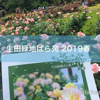生田緑地「ばら苑」2019年春 令和元年も満開!オープンエアの解放感あふれる空間