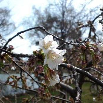 やさしい春になりますように