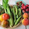 知野ファームの夏野菜&海老のエスカベーシュ