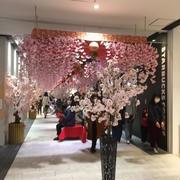 一足早いお花見、イオンモール京都