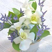 「Bloomee LIFE」ポストにお花が届く新体験!お花の定期便