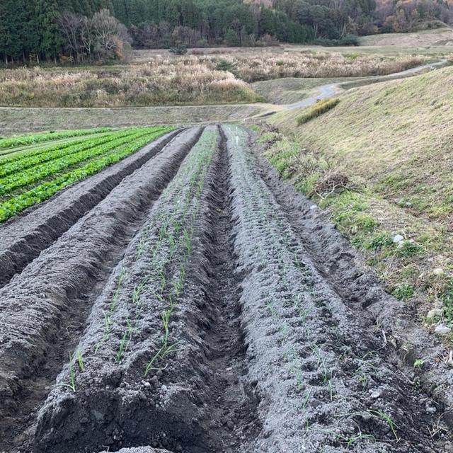 玉ねぎの定植完了&崖みたいな斜面の草刈。