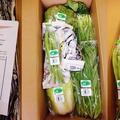 有機JAS野菜モニターを満足でにんまり♪♪♪♪♪ by みなづきさん