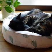 癒される♪ 仲良し猫の毛づくろい