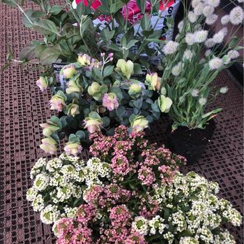 花・植物 ②