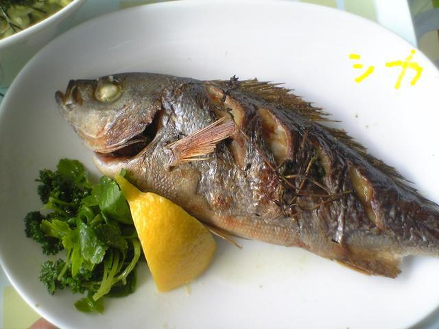 イサキの塩焼きとレモン、葉野菜が添えられている