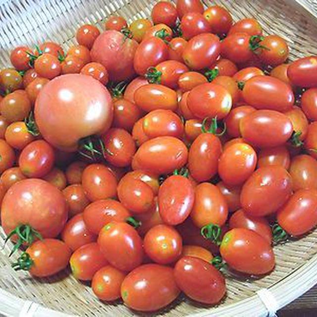 ミニトマトの収穫とランチは盛岡冷麺