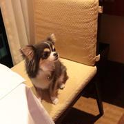 【ペニンシュラ東京】晩御飯に悩む。
