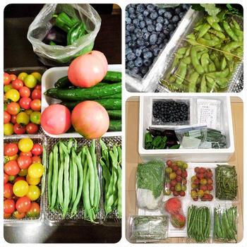 ■菜園野菜を送りました。【コロナ騒動で来れない娘夫婦に/ブルーベリー狩り】