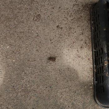変な虫がいた(*あまりかわいくない系昆虫の写真があります)
