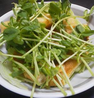 油揚げと豆苗のお手軽サラダ