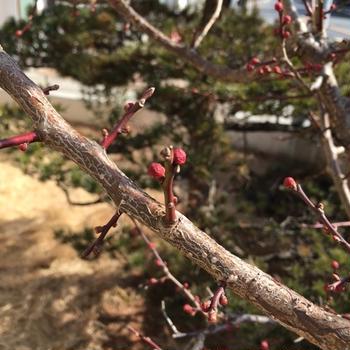春が近づいてるよ。