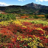 黒岳の紅葉♪ 山頂~お鉢平