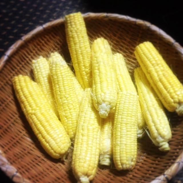 トウモロコシ収穫&冷凍保存