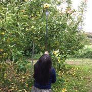 りんご狩り♪