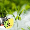 ダイエット雑談第138回 意外と安いよ☆毎日お茶ライフ!(後編)