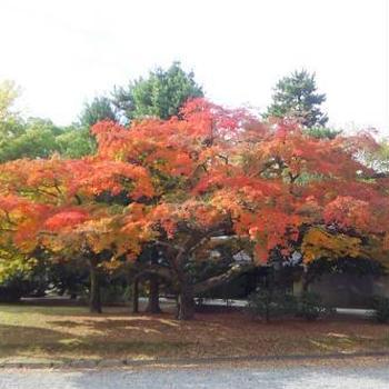 京の紅葉情報 Vol.3