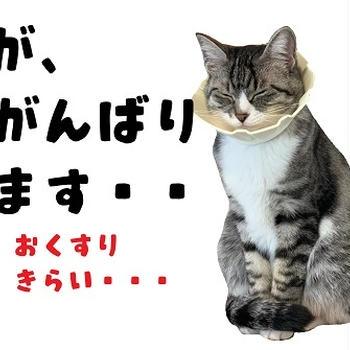 きょうのいちまい・猫も花粉症になるんですって
