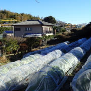 のほほん農園(12月中旬)☆収穫野菜