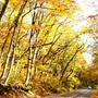 晩秋の大山の風景「キノコを求めて」