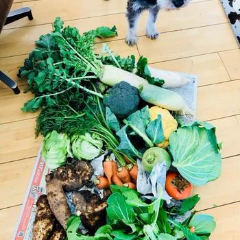 畑から野菜が届きました。