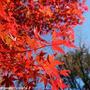 お散歩*紅葉