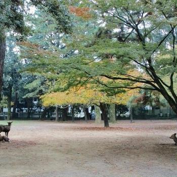 晩秋の奈良・東大寺
