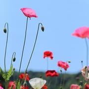 くりはま花の国♪