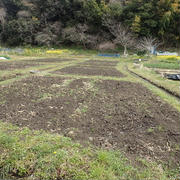 葉山のほほん農園(5月下旬)☆作付けスタート(3分割)