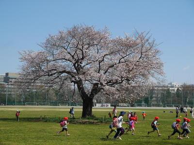 満開の桜にみんなが嬉しそう!