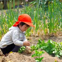 畑仕事1年生の収穫(^^♪