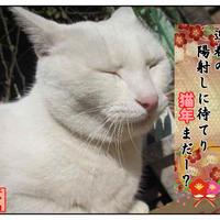【新春】あけおめのご挨拶