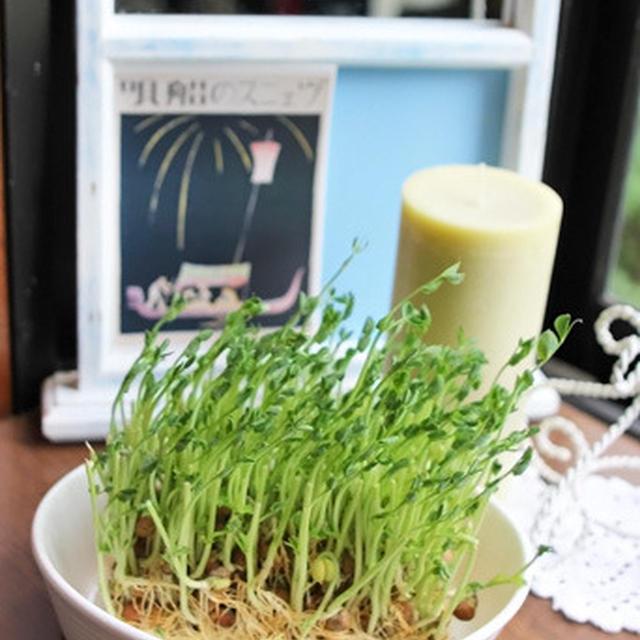 もう一度育てた豆苗と塩麹のパスタ