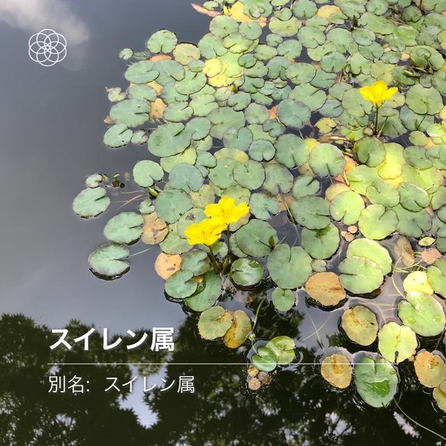 国営昭和記念公園 その2