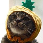 ねこフルーツちゃん パイナップル♪