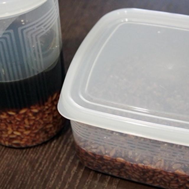 噂の醤油麹の育生開始、時短バージョンとロングバージョンの2種。
