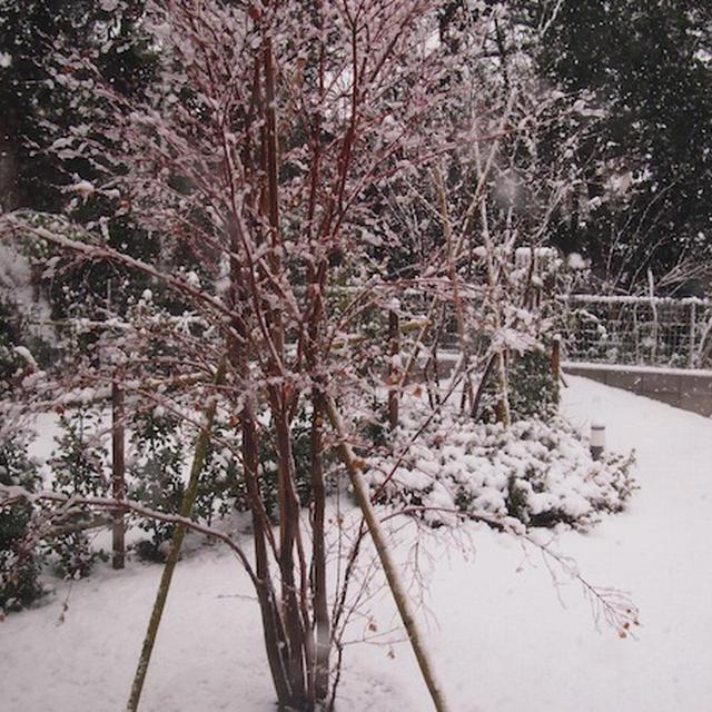 雪の日にほっこり。自家製ジンジャーエール