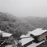 プランター菜園(3月下旬)☆春分の日の雪被害?