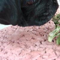 簡単イタリアンハーブ椎茸チーズオムレツ♬・・の巻
