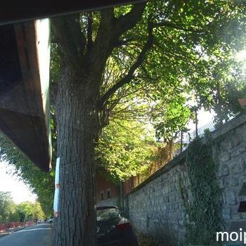 今フランスでよくかかってる曲と共に秋本番マルヌ川ツアー