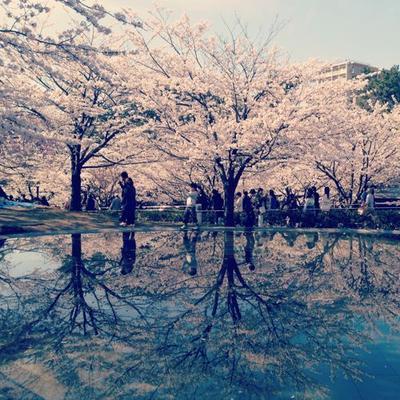 お花見☆2014