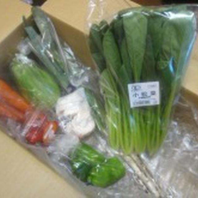 ●野菜嫌いを克服…Vol.2