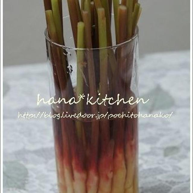 葉しょうがの甘酢漬けのレシピ。