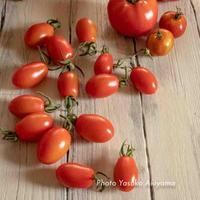 野菜に元気をもらうのだ♪ 家庭菜園とスロージューサー生活。