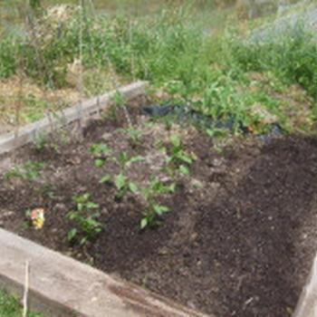 家庭菜園1016初夏