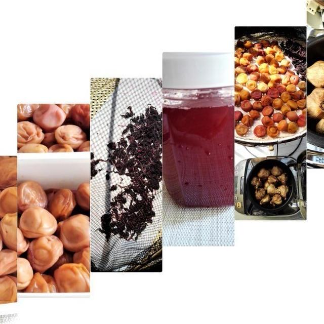 ■自家製保存食【梅干し作りレシピP-3 仕上げ編 /黒ニンニク作りも