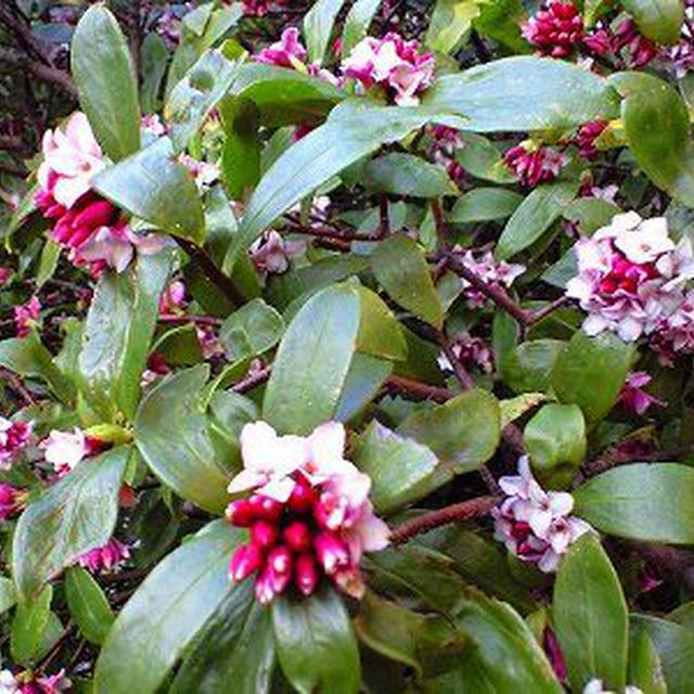 春パスタ。春の花。春の香り。